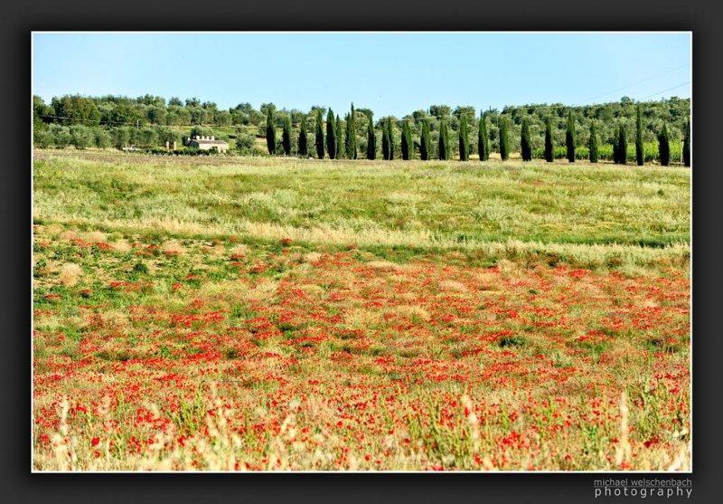 Tuscany Spring Impression