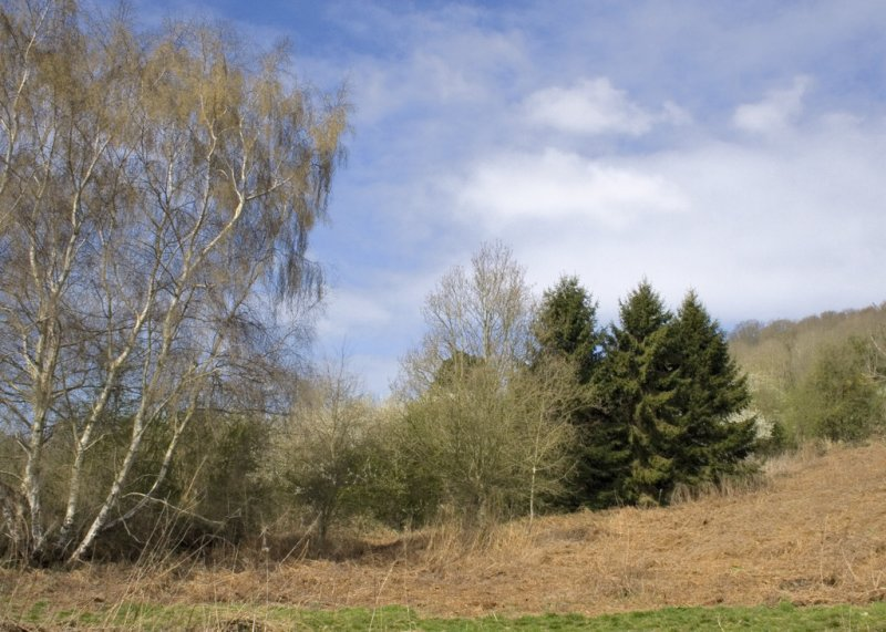 Badley Wood Common - the common was grazed until the gates on the road broke, now returning to woodland