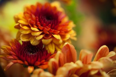 Another Flower Macro