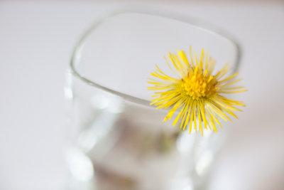 Study of a Little Yellow Flower #7