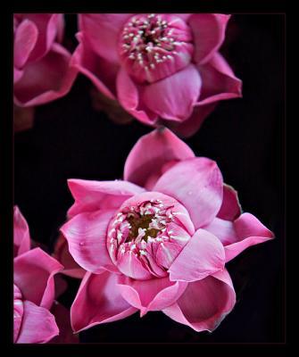 <b>Think Pink *</b>