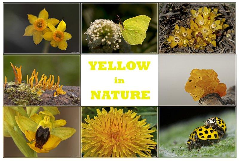 26.04.2010 : yellow