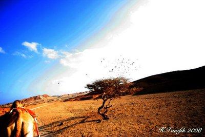 marsa_alam_2008