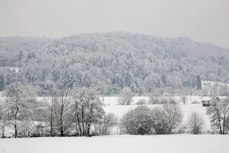 Hard winter huda zima_MG_5969-111.jpg