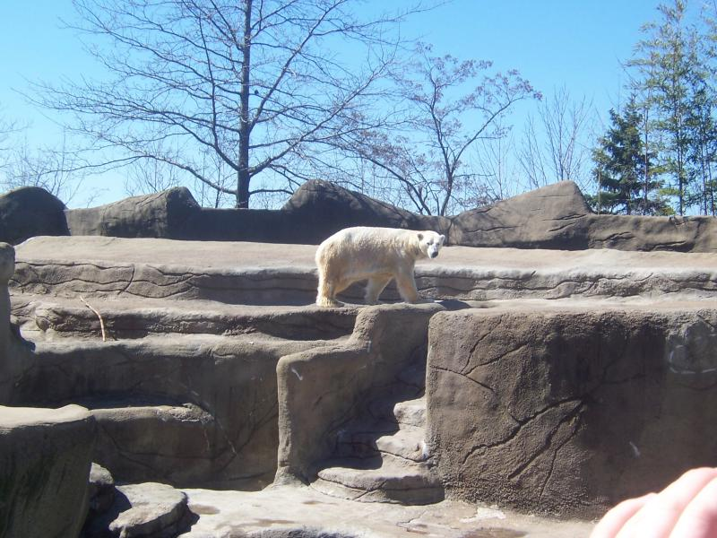 These polar bears were totally showing off