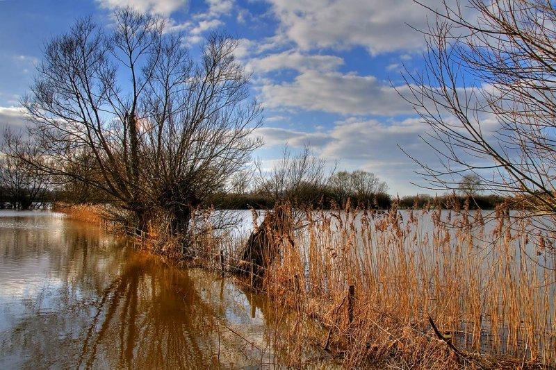 Rushes and reflections, Muchelney