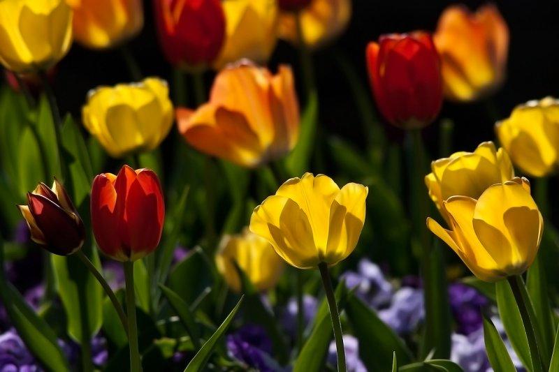 Tiptoe through the tulips!