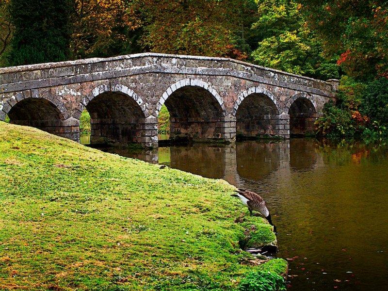 Bridge and goose, Stourhead (2078)