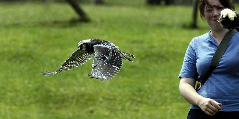 Clovis fly past, Bossington