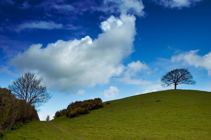 The footpath, Burrow Hill, Somerset (4632)
