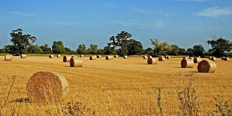 Hay bales near Lytes Cary