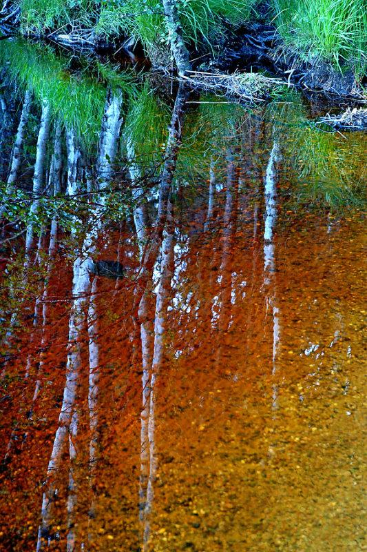 Tree trunk reflections, Loch Garten