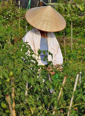 The Tacit Farmer