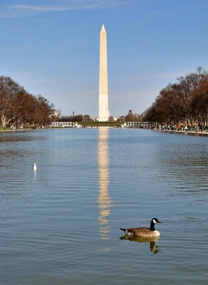 Late afternoon at the Reflecting Pool
