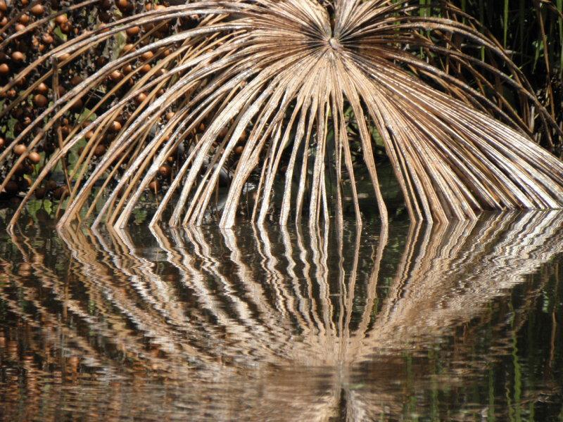 Palm leaf reflection.