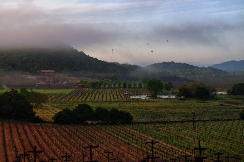 Napa Valley early morning