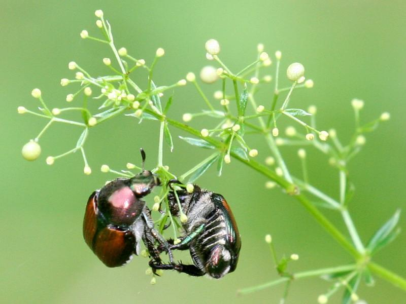 Bugs01.jpg