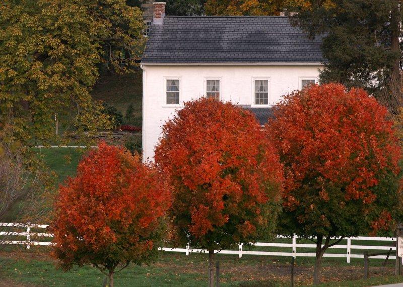 Farmhouse in Autumn