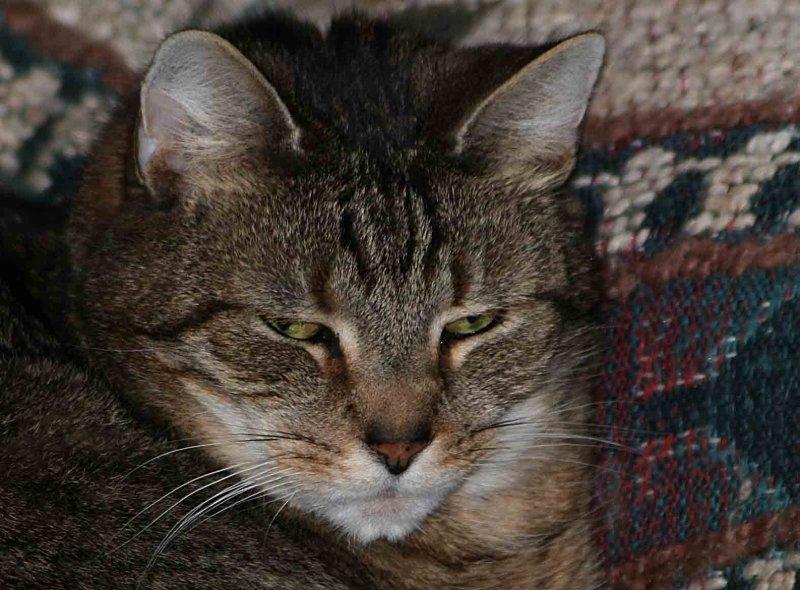 Serious Tigg