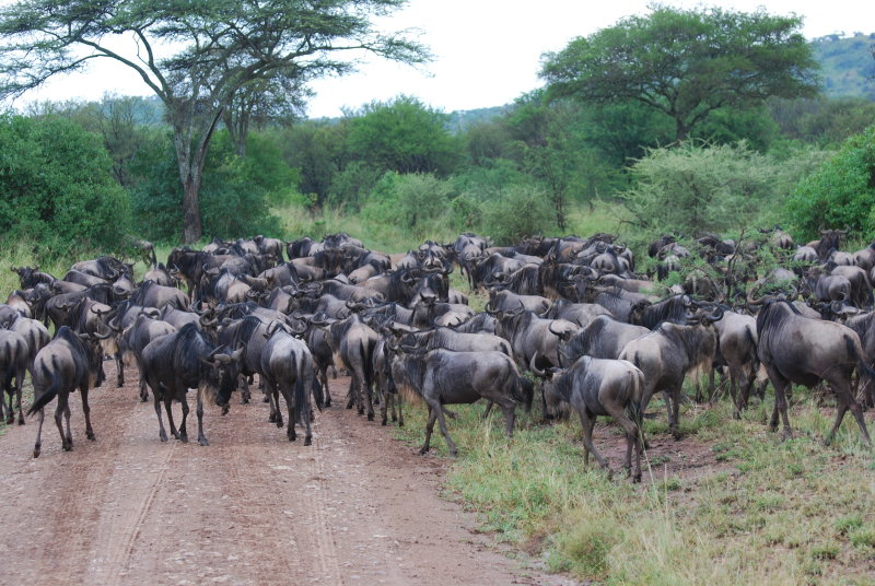 35. While driving around, the migration found us & crossed our paths