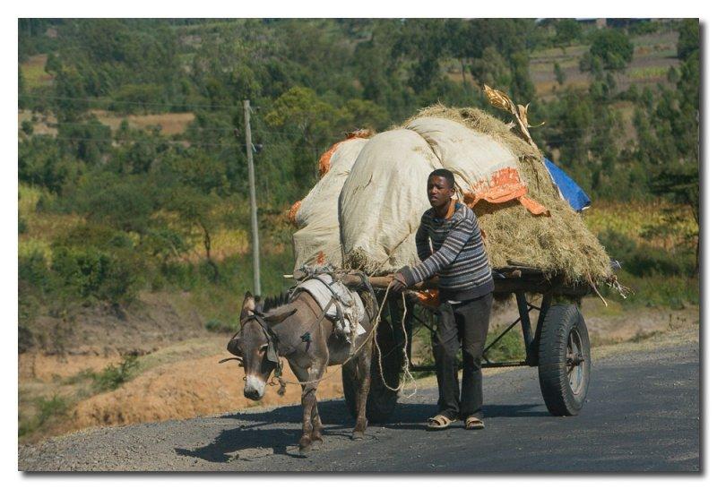 Mucha carga poco animal  -  Load larger than the donkey