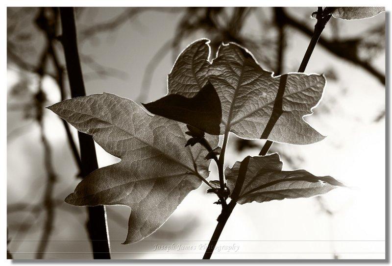 20090306 -- 161859 -- Canon 5D + Sigma 70 / 2.8 macro @ f/8, 1/640, ISO 100