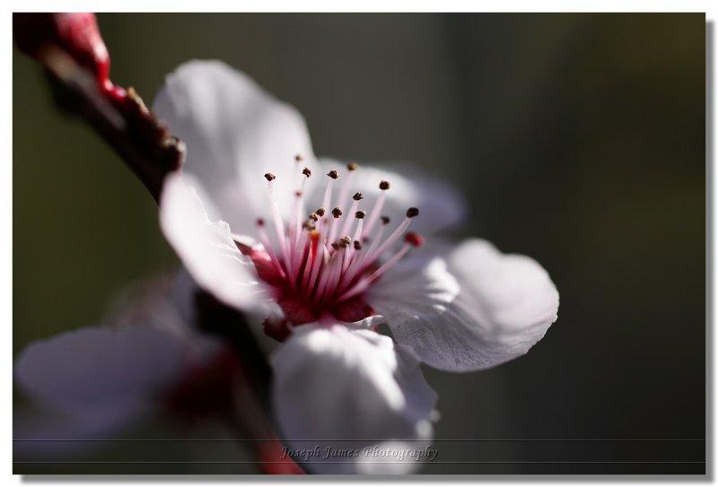 20090306 -- 154632 -- Canon 5D + Sigma 70 / 2.8 macro @ f/2.8, 1/640, ISO 100
