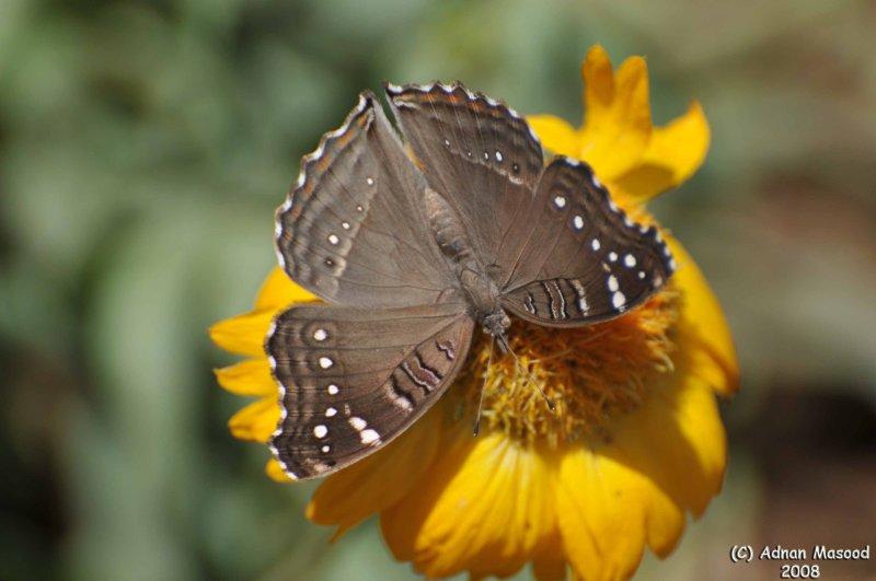 ABHA_Flower_ButterFly - 025.jpg