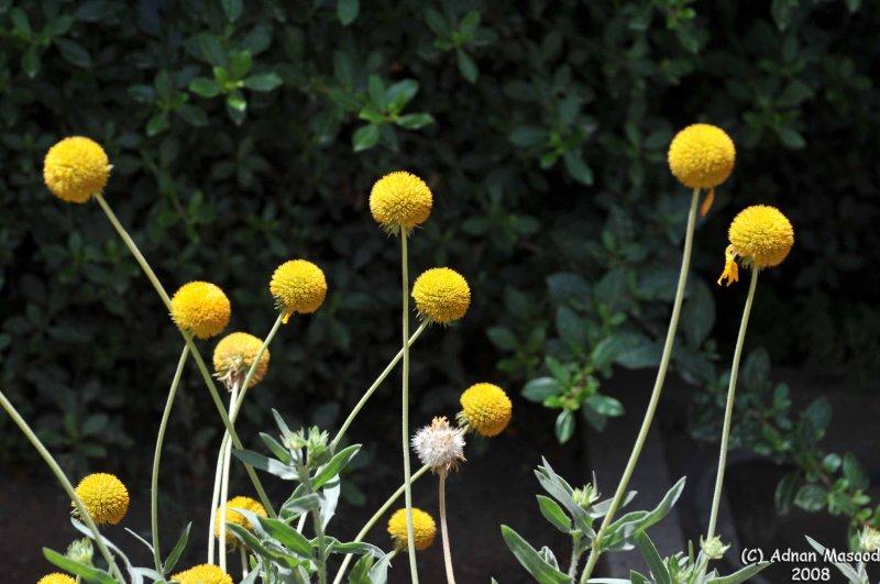 ABHA_Flower_Buds- 029.jpg
