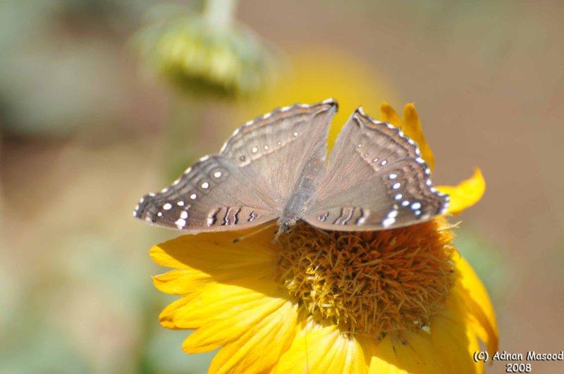 ABHA_Flower_ButterFly - 024.jpg