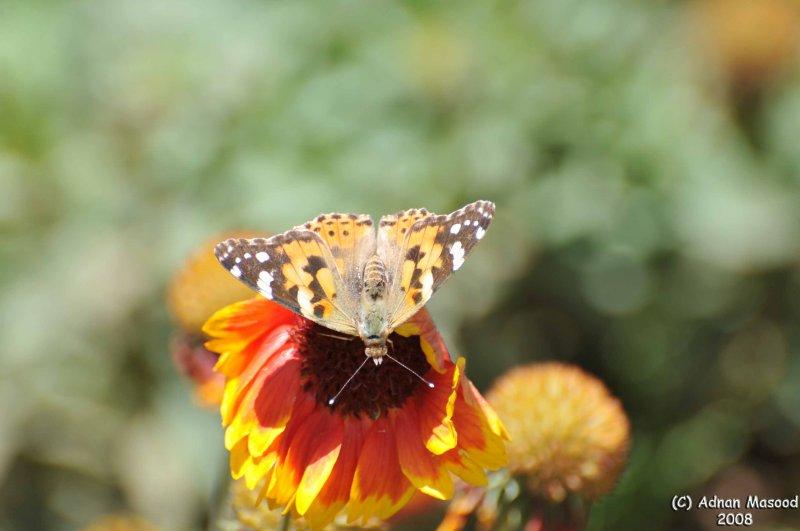 ABHA_Flower_ButterFly - 026.jpg