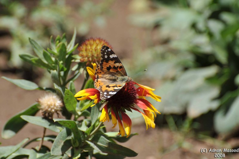 ABHA_Flower_and_Butterfly_032.jpg