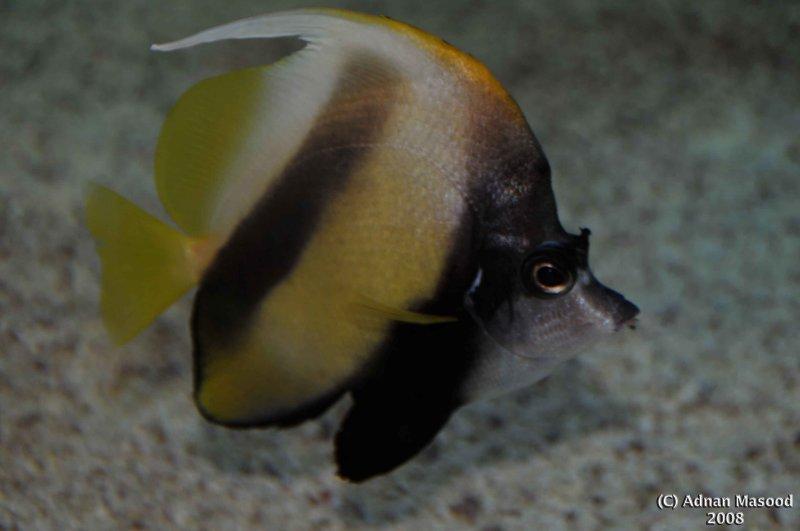 Fish_007.jpg