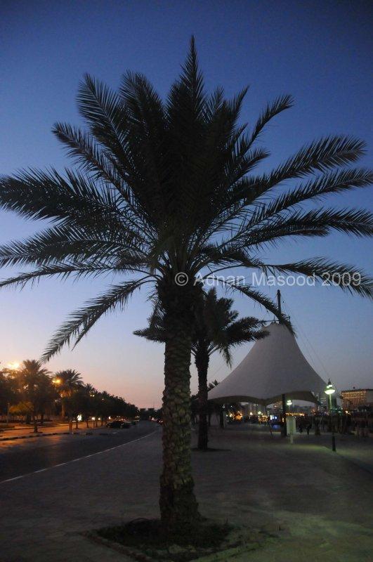 Dubai_091210.JPG