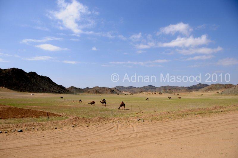 Makkah_road_1007.JPG