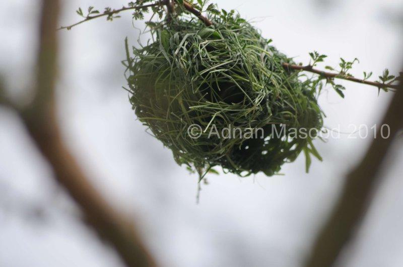 Nest_1002.JPG