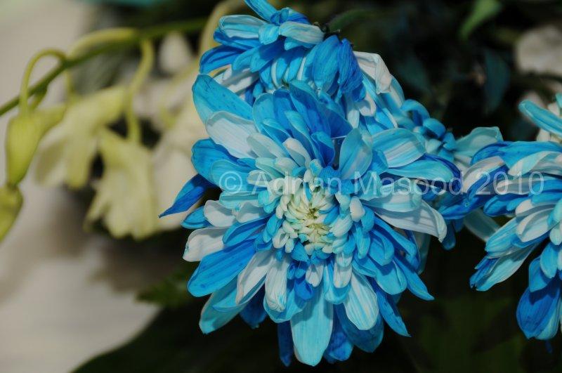 Flower_04102.JPG