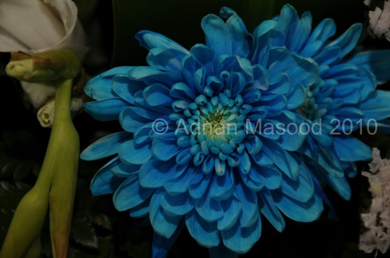 Flower_04104.JPG