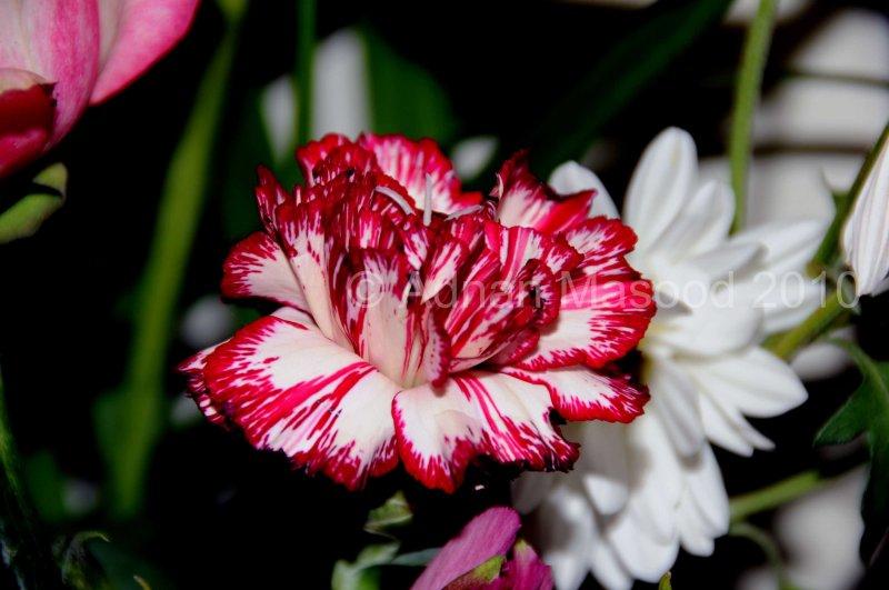 Flower_04108.JPG