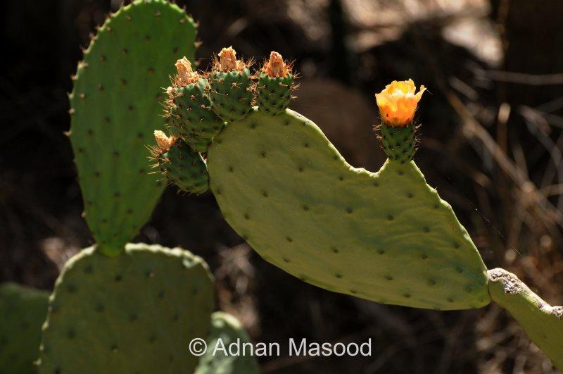 Cactus_0161.JPG