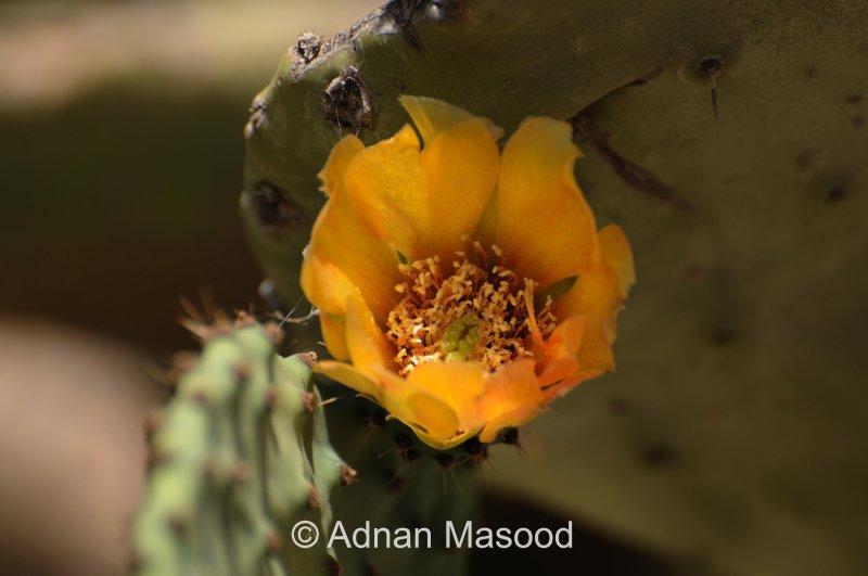 Cactus_0163.JPG