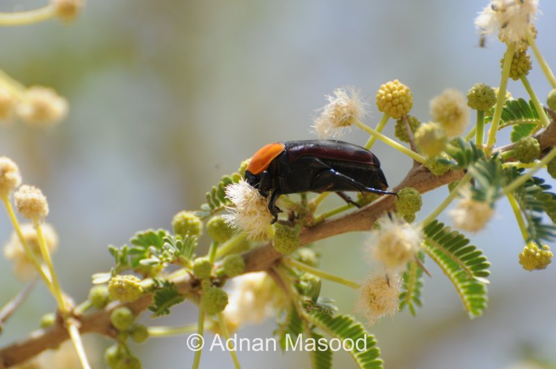 Insects_0610.JPG