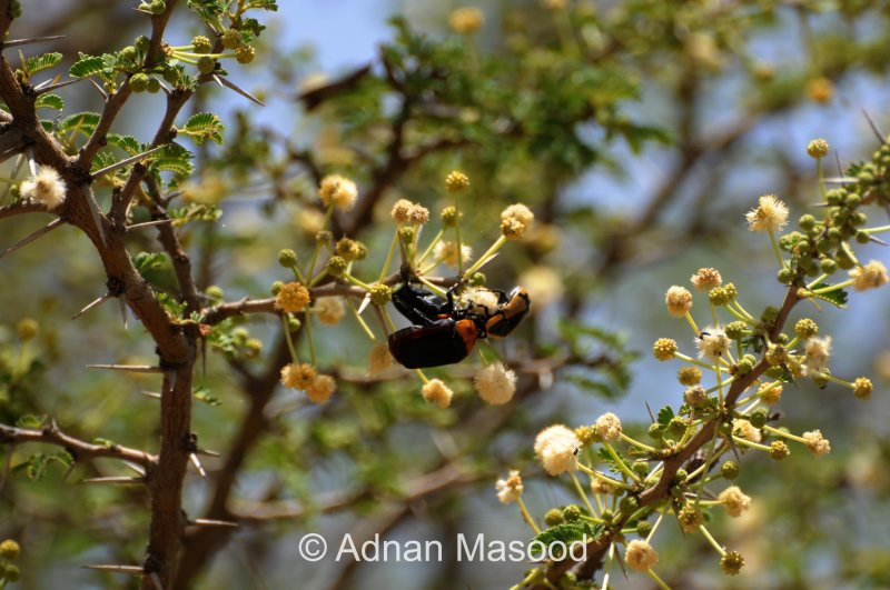 Insects_0612.JPG