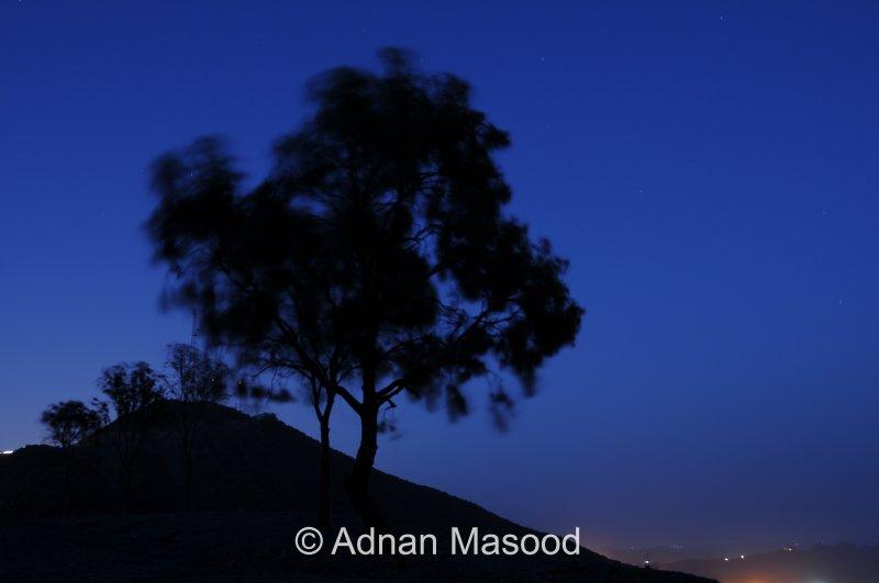 Trees_02.JPG