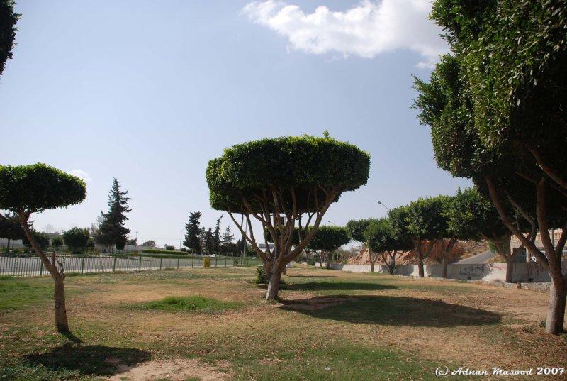 Al-Hada.JPG