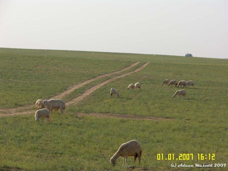 Between Qunfadah and Al-Leith 2.JPG