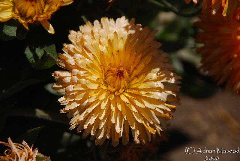 Spring Flowers in SA - 009.JPG