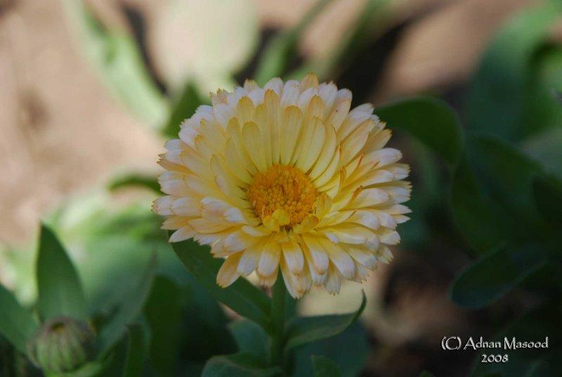 Spring Flowers in SA - 017.JPG