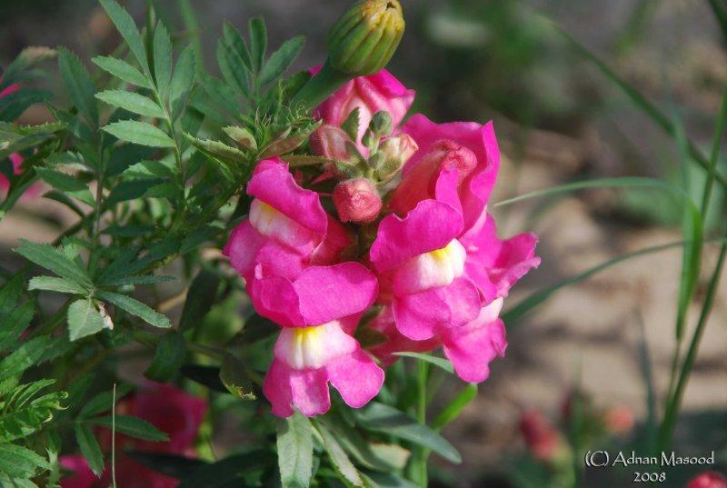Spring Flowers in SA - 028.JPG