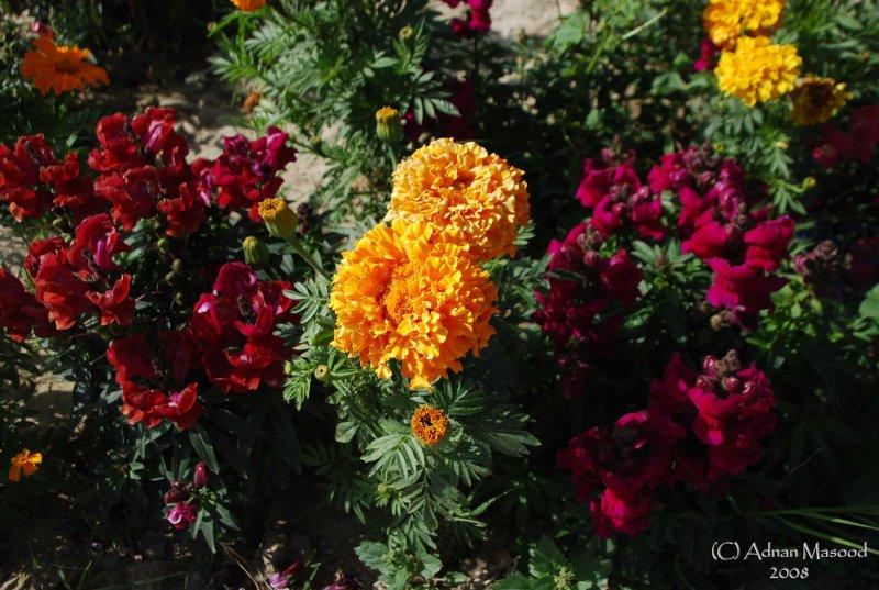 Spring Flowers in SA - 030.JPG